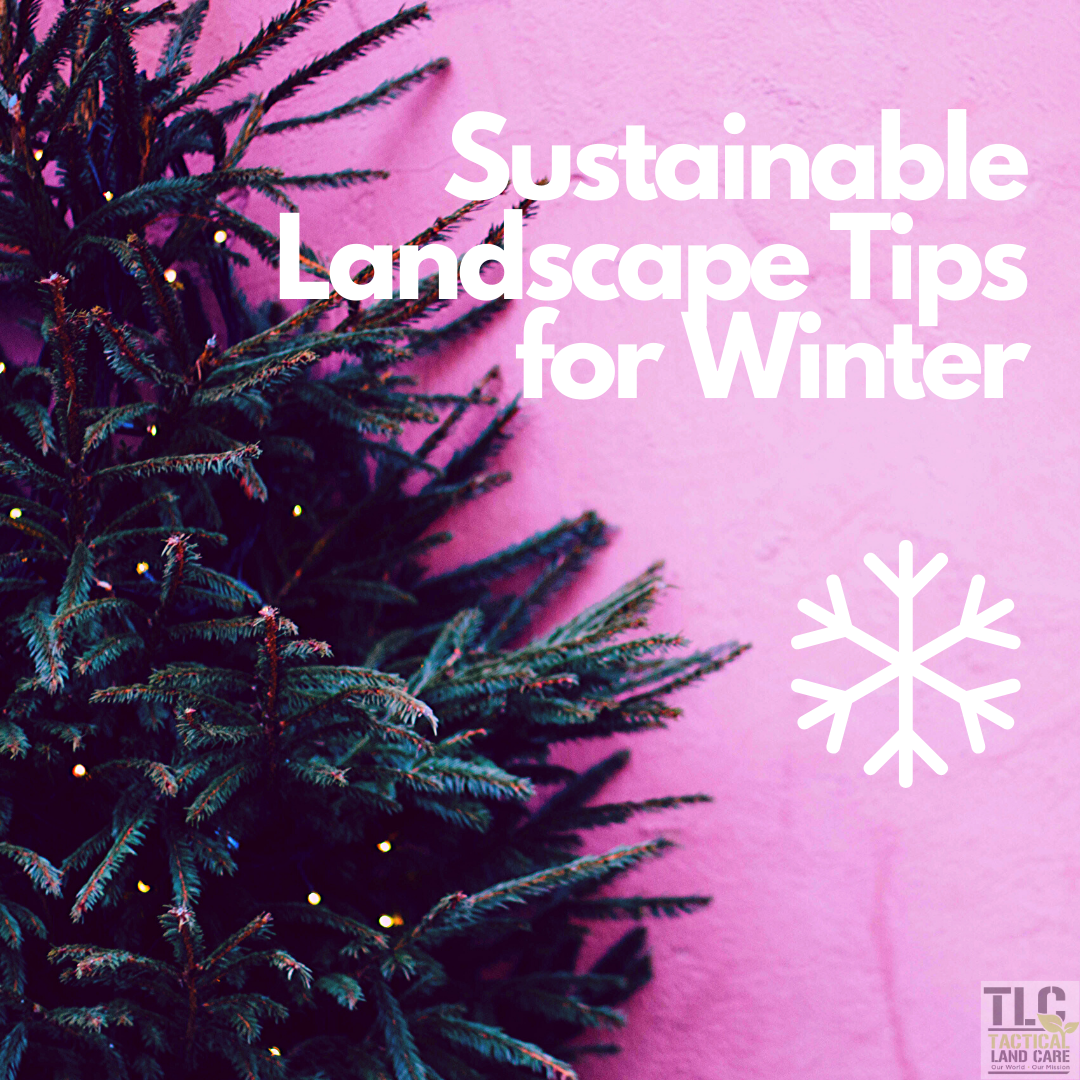 Sustainable Landscape Tips for Winter