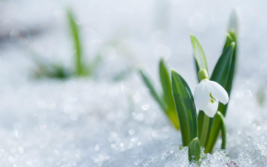 Winter Plant Tips