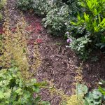 Mulch bed and additional plants for removal